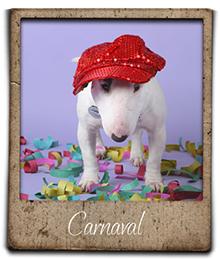 miniature bull terrier carnaval